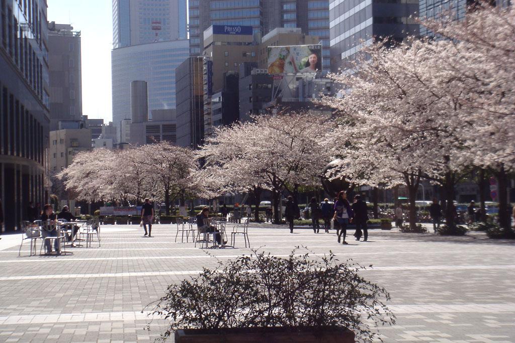 shinjuku-ruas-sakura