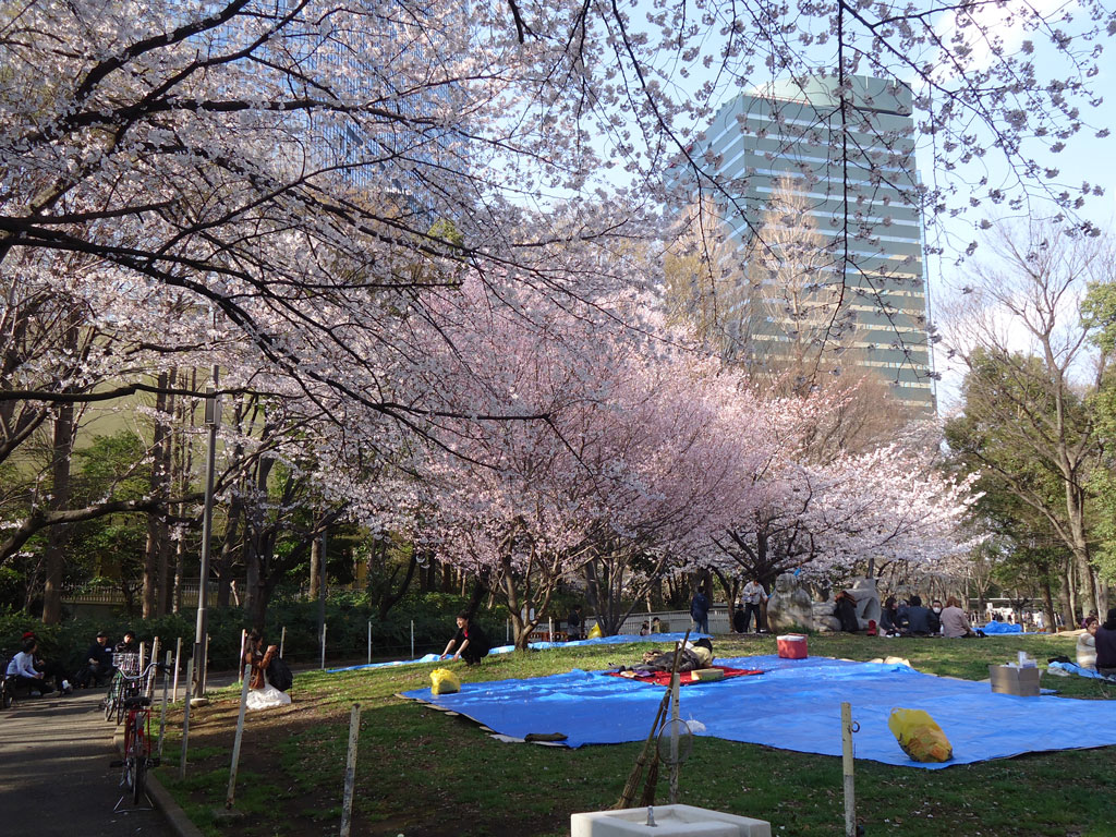 cerejeiras-picnic-no-chuo-park