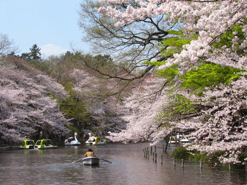 Inokashira Park no Japão