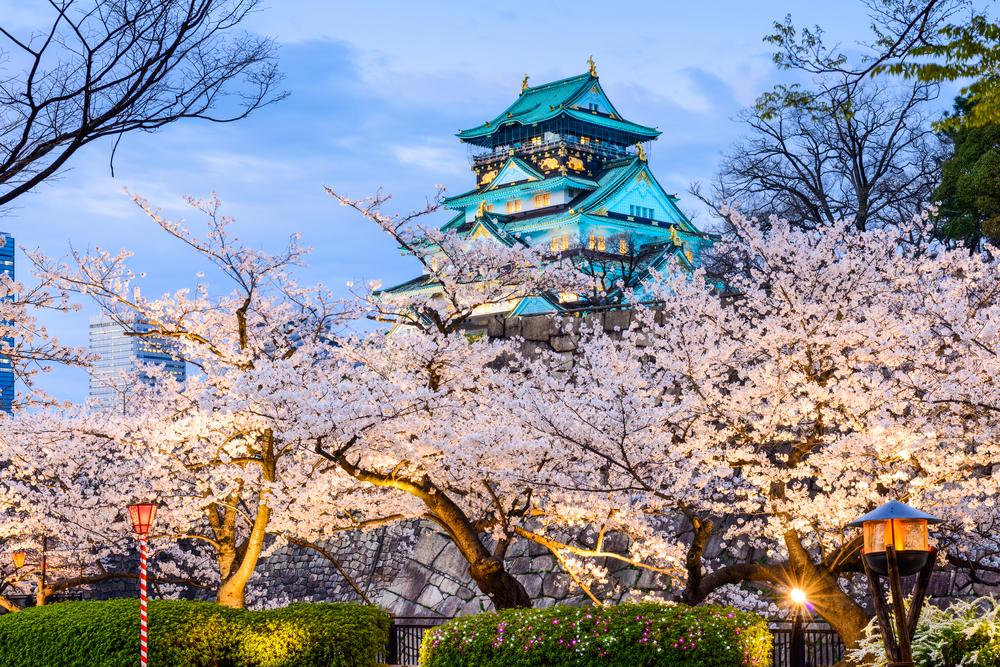 flores de cerejeira no Castelo de Osaka - Osaka