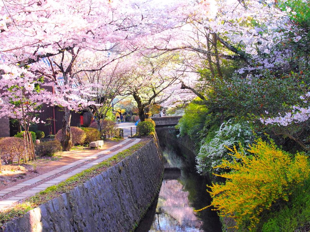 flores de cerejeira no Philosopher's Path (Caminho do Filósofo) - Kyoto