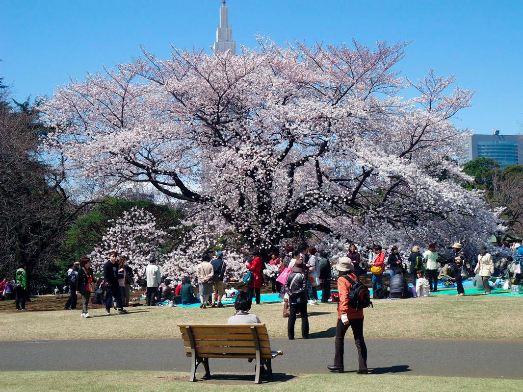 Shinjuku Gyoen park na primavera